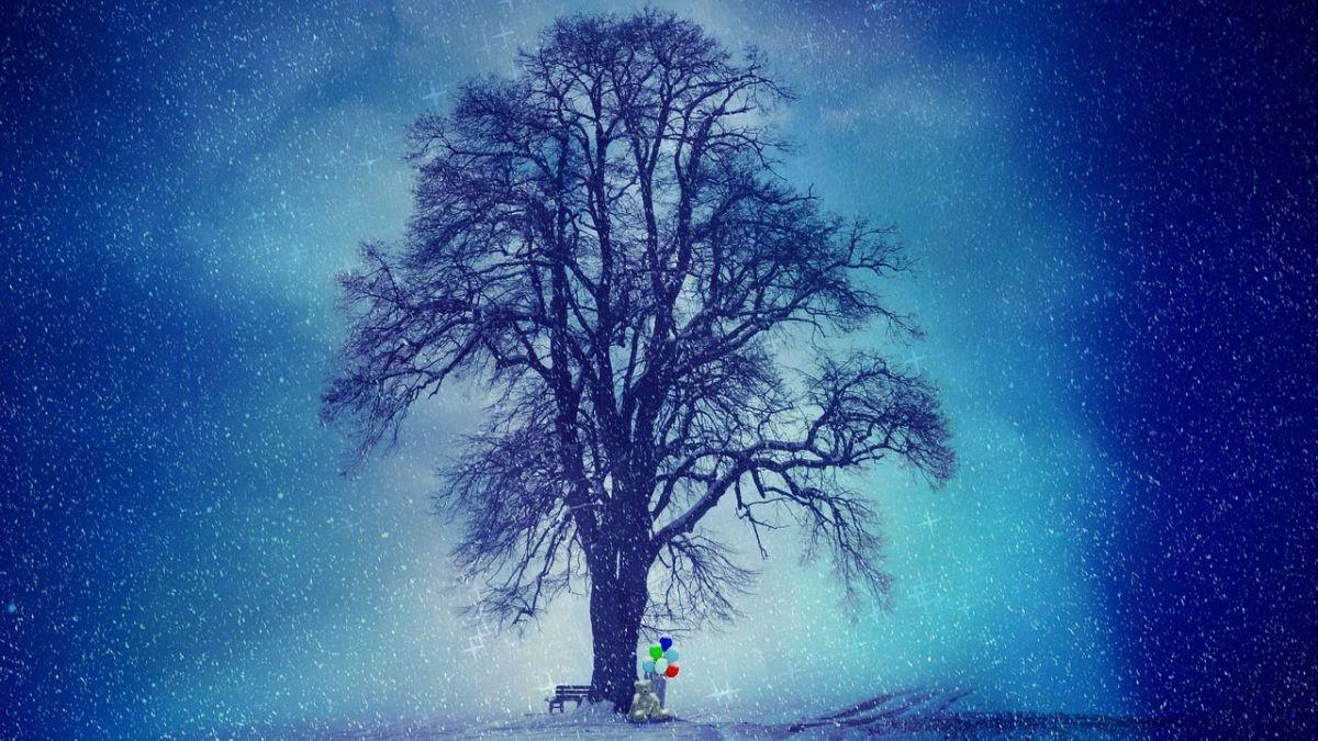 Le test de l'arbre, un test de personnalité très simple qui en dit long sur vous